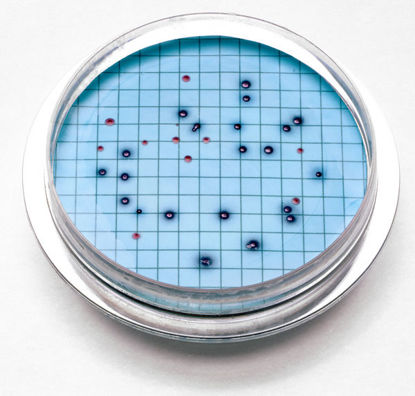Picture of PK(15/pk) - H-28052-15 - m-ColiBlue24 Agar Plate (H2805215)